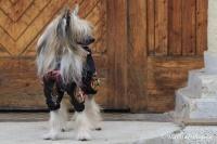 FOTO – Pláštěnka pro psy od ForMyDogs, černá s potiskem (5)