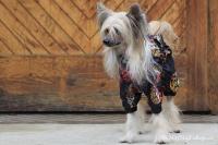 FOTO – Pláštěnka pro psy od ForMyDogs, černá s potiskem (6)