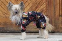 FOTO – Pláštěnka pro psy od ForMyDogs, černá s potiskem (8)