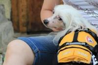 FOTO – plovací vesta pro psy od EZYDOG s unikátní vztlakovou pěnou, reflexními prvky a pohodlnou a promyšlenou konstrukcí, žlutá (2).