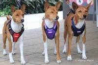 Postroj pro psy značky ForMyDogs v zářivě fialové barvě. Pevný odolný materiál, polstrování na hrudníku, bezpečnostní reflexní prvky (3).