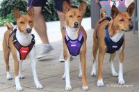 Postroj pro psy značky ForMyDogs v černo-červené barvě. Pevný odolný materiál, polstrování na hrudníku, bezpečnostní reflexní prvky (3).