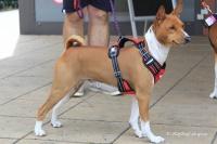 Postroj pro psy značky ForMyDogs v černo-červené barvě. Pevný odolný materiál, polstrování na hrudníku, bezpečnostní reflexní prvky (4).