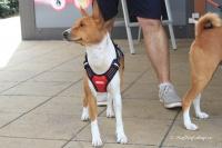 Postroj pro psy značky ForMyDogs v černo-červené barvě. Pevný odolný materiál, polstrování na hrudníku, bezpečnostní reflexní prvky (6).