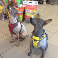 Nastavitelný postroj pro psy od RED DINGO vhodný pro každodenní používání díky podšívce z jemného flísu. Foto zákazníků. (4)