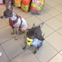 Nastavitelný postroj pro psy od RED DINGO vhodný pro každodenní používání díky podšívce z jemného flísu. Foto zákazníků. (5)