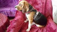 Nastavitelný postroj pro psy od RED DINGO vhodný pro každodenní používání díky podšívce z jemného flísu. Foto zákazníků. (7)
