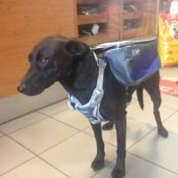 ULTIMATE WEATHER SHIELD PRO je originální nastavitelný postroj pro psy s pláštěnkou a dvěma brašnami. Foto zákazníků. (2)