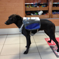 ULTIMATE WEATHER SHIELD PRO je originální nastavitelný postroj pro psy s pláštěnkou a dvěma brašnami. Foto zákazníků.