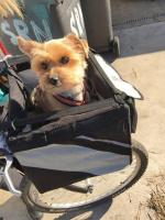 Praktický přepravní box-taška na psa k připevnění na řídítka. Foto zákazníků. (2)