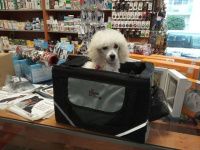 Praktický přepravní box-taška na psa k připevnění na řídítka. Foto zákazníků.
