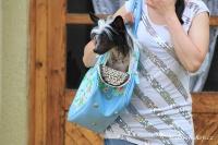 FOTO – Luxusní prostorná kabelka/taška na psy z kolekce Urban Pup, řada Summer Rose. Doporučená maximální váha psa 8 kg (3).