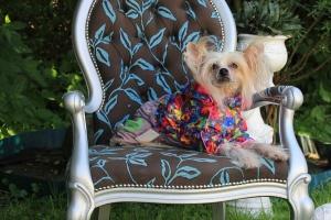 FOTO – Obleček pro fenky – zimní overal FMD, šedý s květinovým potiskem (3)