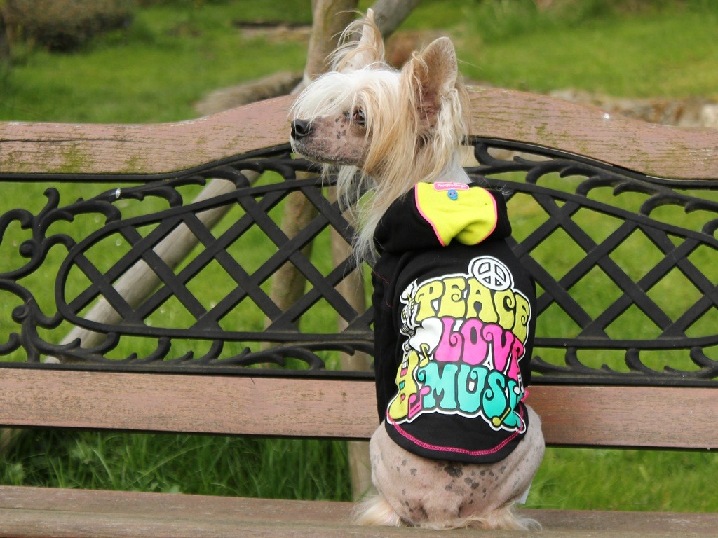 Oblečky pro psy – Veselá mikina pro psy i fenky od For My Dogs
