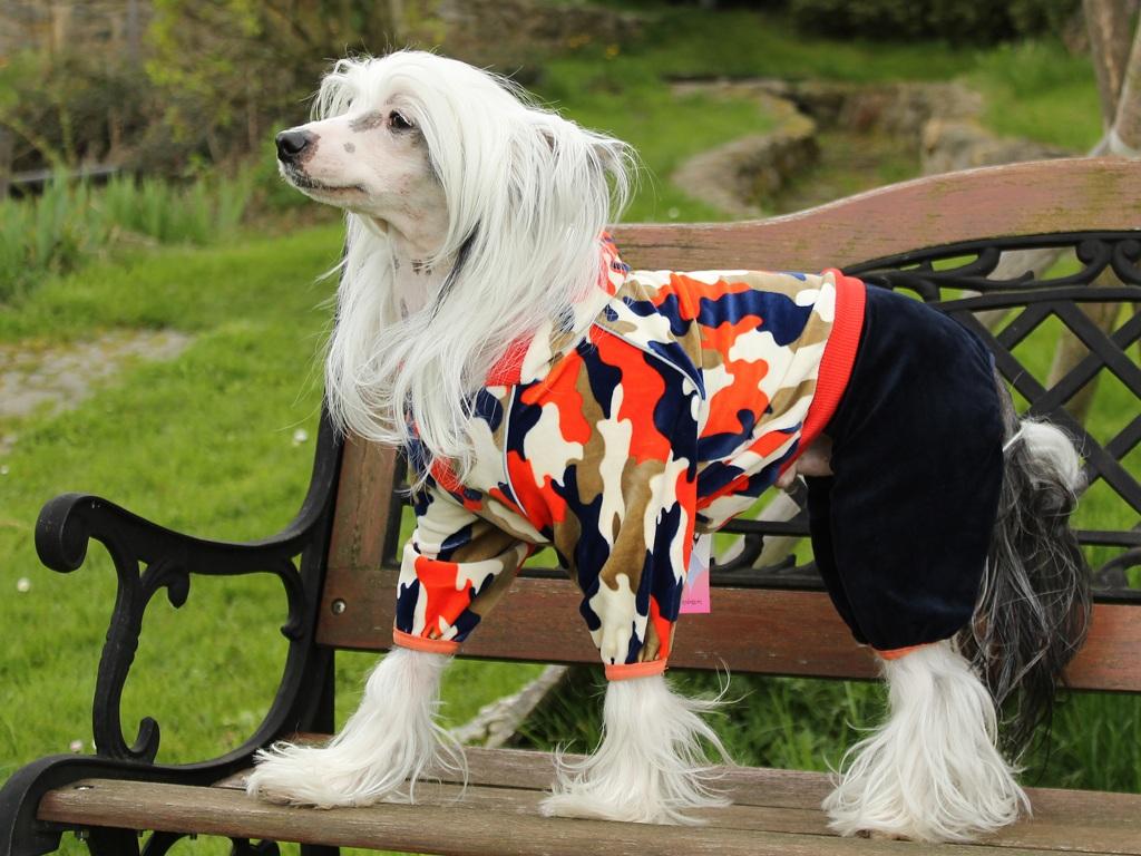 Oblečky pro psy FMD – Měkoučký overal pro psy z veluru s reflexními švy