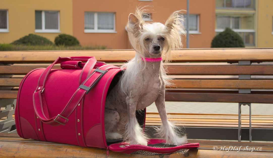 20e2281c72 Tašky pro psy – čínský chocholatý pes v tašce od HafHaf-shop.cz
