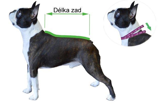 Měření psa – délka zad
